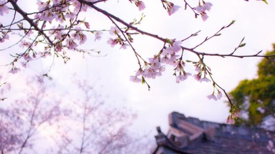 Matrimonio in Giappone: tante esperienze in un'esperienza